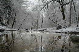 Bare snowy trees reflect on the surface of icy water during the winter solstice